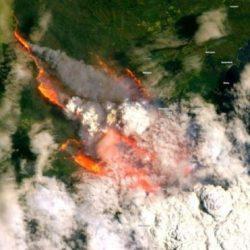 """حرائق غابات الاوكسجين في أستراليا: نفوق قرابة """"500 مليون حيوان"""""""