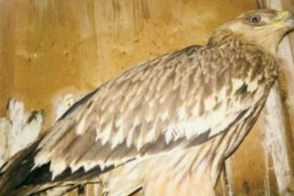انقاذ 65 طائراً وحيواناً مهدداً بالانقراض بمصر