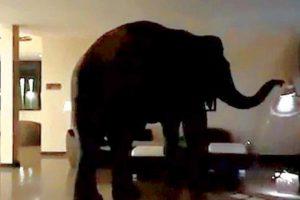فيلة تتجول داخل أروقة فندق 5 نجوم في سريلانكا والنمو السكاني يتراجع في آسيا