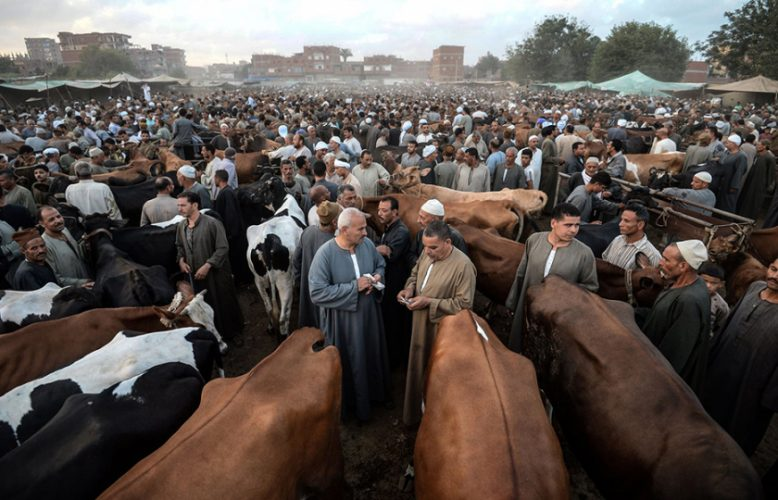 الاحترار والسوق العالمي:كيف يؤدي نقص مياه الشرق الأوسط إلى زيادة الطلب على استيراد الماشية؟