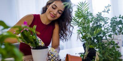 زراعة النباتات المنزلية كخيار رائع ..خطوة بخطوة