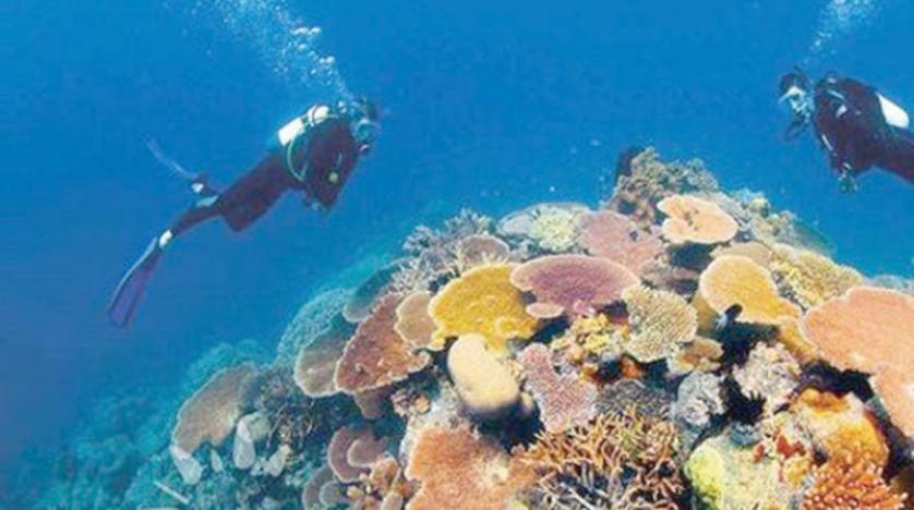 الحيد المرجاني العظيم يعاني من ارتفاع حرارة البحر