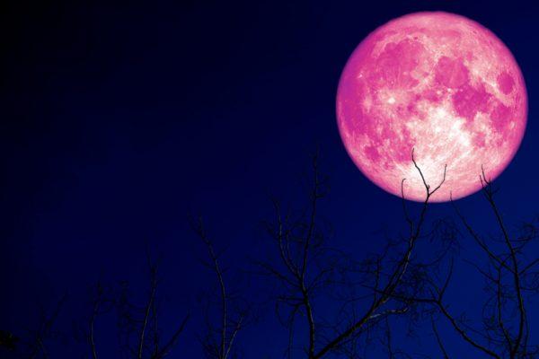 القمر الوردي العملاق سيظهر لمرة واحدة في السنة..