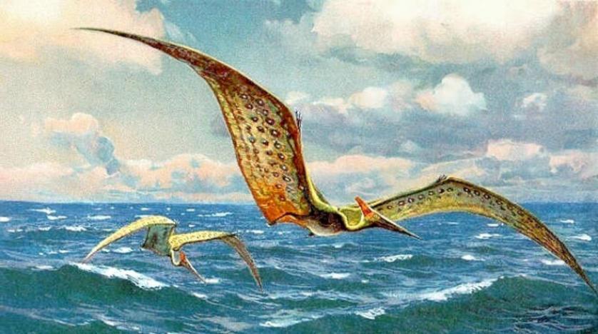 اكتشاف حفرية تيروصور عديم الأسنان وإطلاق اسم عالم مغربي عليها