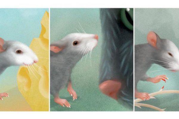 صفة مشتركة جديدة مع الإنسان… وجه الفأر عنوان لمشاعره