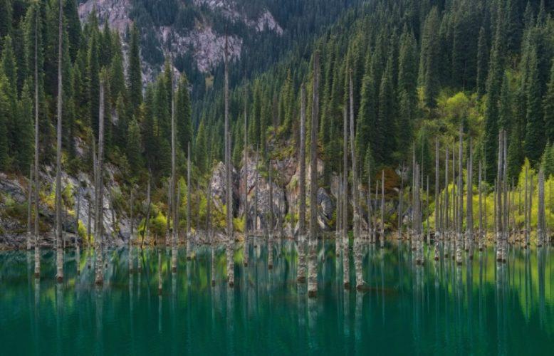 خزان محتمل لأدوية السرطان ومضادات الآلام.. اكتشاف أقدم غابة تحت الماء لم يصلها البشر منذ 60 ألف عام
