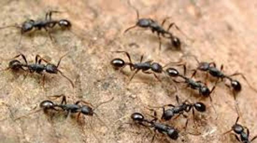 تراجع في أعداد النمل والنحل والفراشات... لكن البعوض في تزايد و أطفال تنزانيا أبطال قصة لقاح  ضد الملاريا