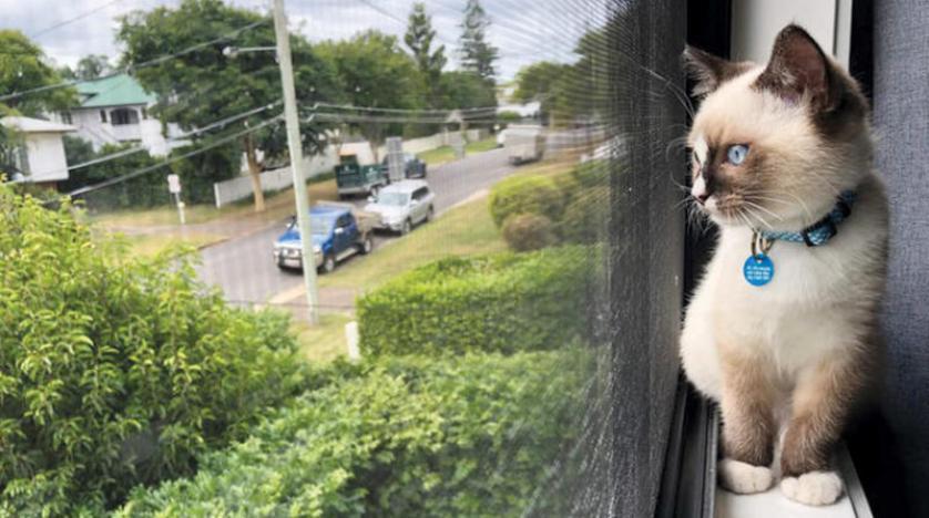 القطة الواحدة تقتل 186 كائناً حياً كل عام وكلب يعالج نفسياً طاقماً طبياً في المكسيك