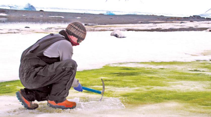 الأخضر يغطي ثلوج القارة القطبية الجنوبية وموجة حر خانقة في جنوب شرقي أوروبا والشرق الأوسط