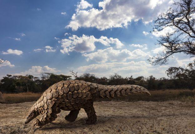 الصور الفائزة بجوائز مسابقة سوني العالمية للتصوير