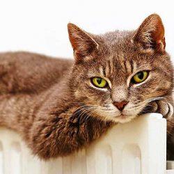 القطط تنقذنا وتحمينا بفضل حساسيتها من كورونا واخطاره