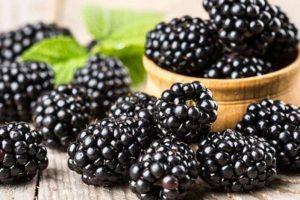 التوت الأسود (الشامي)علاج واعد لالتهاب الجلد