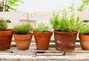 ثمان نباتات طاردة للبعوض تحتاجها لمنزلك صيفا