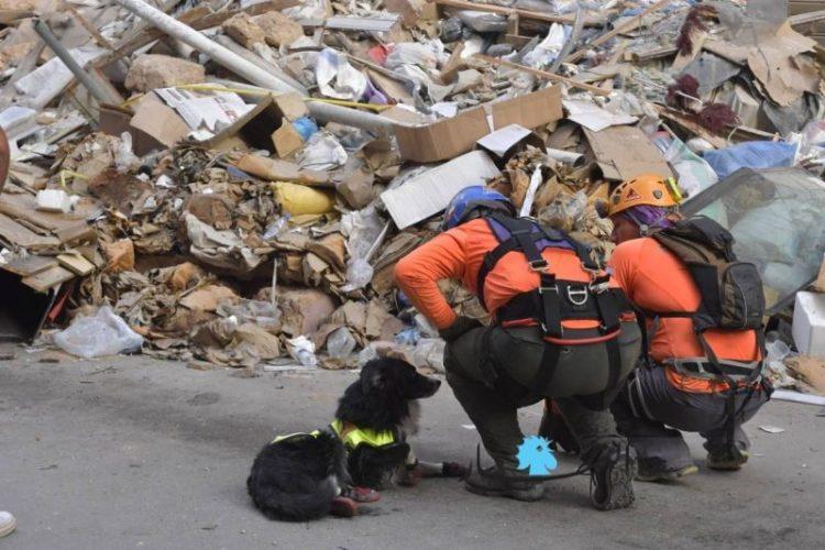صحف اليوم :كلب يبعث الأمل في نفوس اللبنانيين بوجود ناجين والعراق يتحرك لمواجهة «السلاح المنفلت»