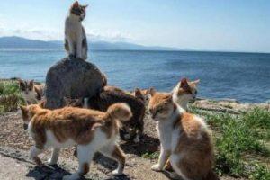 مساعٍ لإيواء 110 قطط طُرِدت من شقة في إسبانيا و70 حوتاً تقطعت بها السبل في جنوب أستراليا واللاجئين يحرقون احياء؟؟
