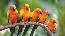 مفكرة القرية: لمن ولماذا تغني الطيور ؟