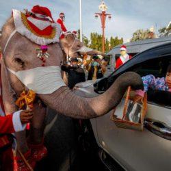 هدية «بابا نويل»... كمامة من خرطوم فيل في شوارع تايلاند