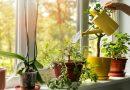 النوع المناسب في المكان المناسب.. إليك أفضل 10 نباتات منزلية