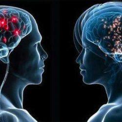 لا اختلاف بين أدمغة الذكور والإناث و «الخلايا التائية» للجهاز المناعي تتصدى لـ«كورونا» وسلالاته