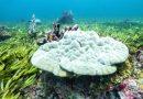 اكتشاف أكبر غابة من أعشاب البحر