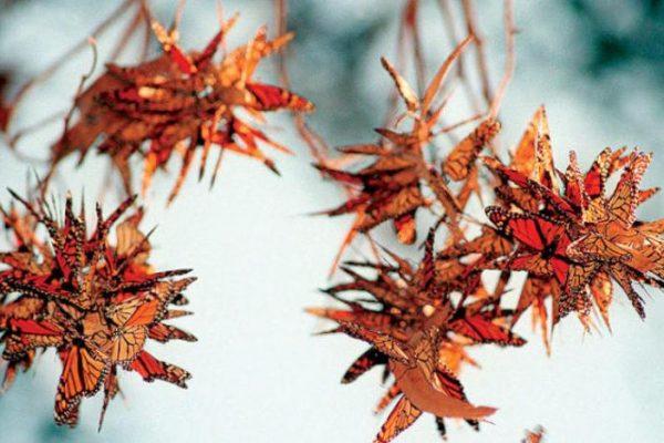 20% من أنواع فراشات العالم في كولومبيا و العناكب تفترس 86 نوعاً من الأفاعي