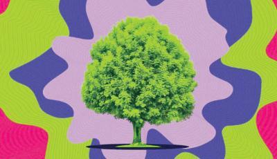 منصة إذاعية تبث أغاني من أصوات الأشجار وهي تنمو و «ماتا مويا» لغوغان ستبقى في إسبانيا بعقد إيجار