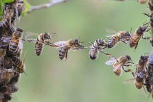 ماذا يحدث إذا انقرض النحل؟فقر ومجاعات وتردٍّ في الأوضاع الاقتصادية..