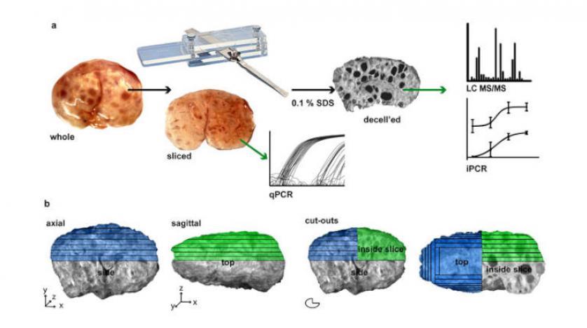 تكنولوجيا:طباعة ثلاثية الأبعاد للمبيض لعلاج مشكلات الخصوبة
