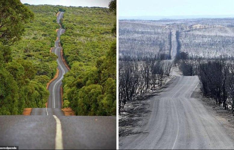 والداي في أستراليا يعيشان بدون كهرباء ولا أستطيع التواصل معهما.. أنا عالم بيئي وهذه هي أسباب حرائق الغابات