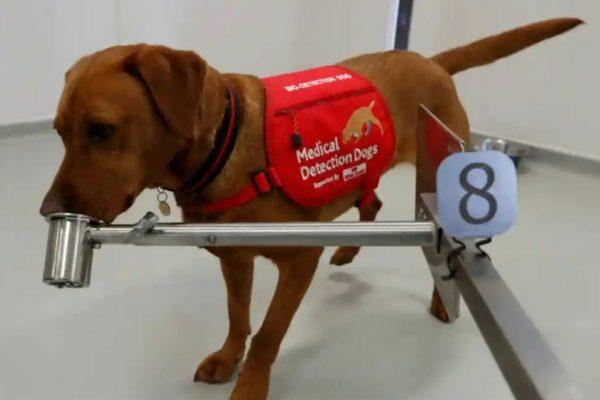تتعرف على 250 مصاباً في الساعة..تدريب الكلاب للكشف عن كورونا
