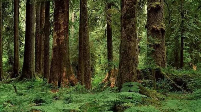الاحترار المناخي يفقد الغابات المدارية قدرتها على تخزين الكربون