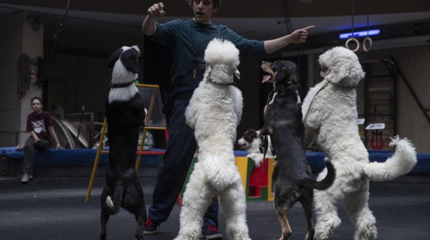 تحذير من احتضان الكلاب والقطط: فراؤها تنقل «كورونا»