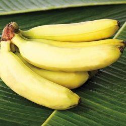 لاتاكل الموز مع البطيخ اوالبطاطا واحذر بكتيريا ضارة بالأمعاء تسبب السكتة الدماغية