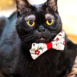 القط لديه حاجبان أبيضان واتهام خبيري آثار فرنسيين ليسا بيدين بيضاء بالاتجار باثارنا..