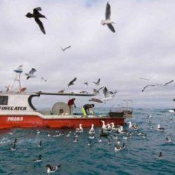 """""""السيكلز"""" اوطيور القطرس التي """"تصطاد القراصنة"""" في أعالي البحار"""