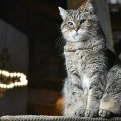 """قطة آيا صوفيا الشهيرة """"جلي"""" لن تغادر آيا صوفيا بعد تحويله لمسجد.."""