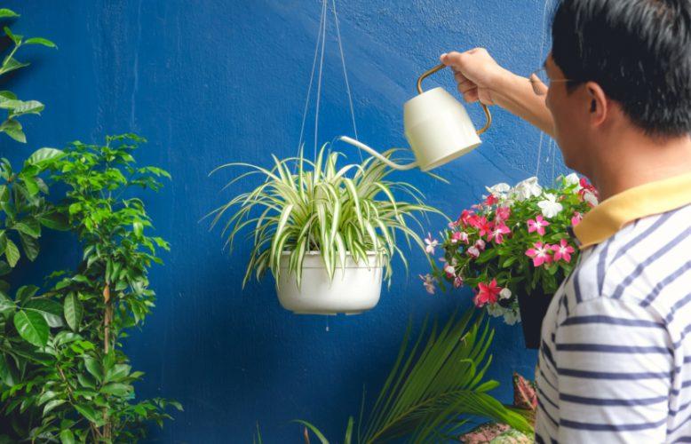 قليل من الاهتمام تمنحك الكثير من الانتعاش.. 8 نباتات منزلية للصيف تُلطّف الهواء في الأيام الحارة