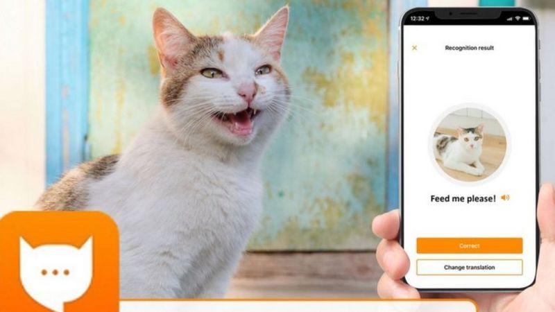 """""""مياو توك"""": تطبيق جديد لترجمة مواء القطط!امضي وقتا ممتعا مع قطتك"""
