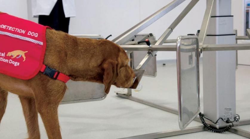 """الكلاب تلتقط رائحة سرطان البروستاتا من البول ,كندا تهتم بـ """"الكلاب الكاشفة لكورونا"""""""
