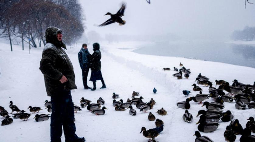 الطيور تُصاب بالبرد أيضاً والصبار مصدر للغذاء ووقود المستقبل