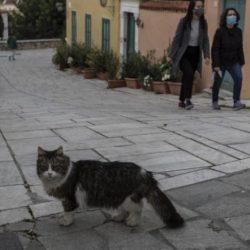 هل تعلم كم سنة تعيش القطط وما أكبر 5 منها في العالم؟