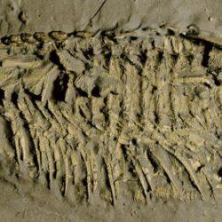 كائنات بحرية منقرضة قبل 450 مليون سنة تتنفس من الساق