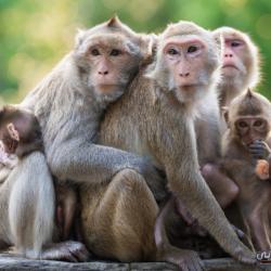 القرود خليعة وفرس النبي شهيد في سبيل الحب.. 15 طريقة غريبة للتزاوج في عالم الحيوان