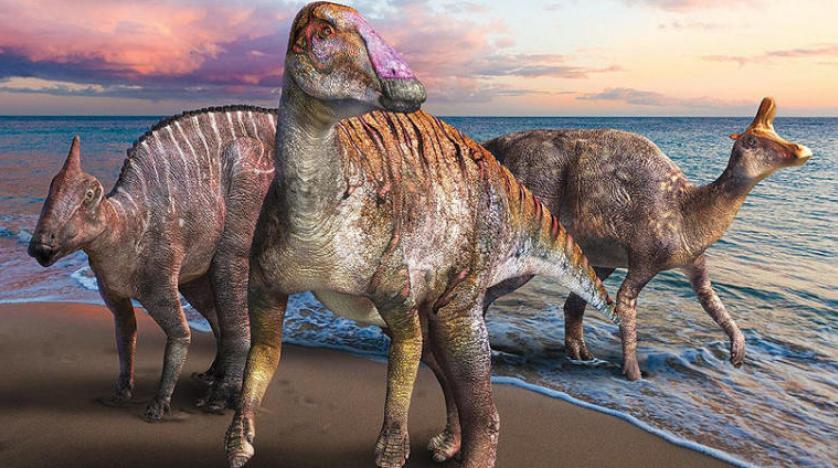 جنس جديد من «ديناصور منقار البط» في اليابان والسيارات الذاتية القيادة تجوب طرق بريطانيا نهاية العام
