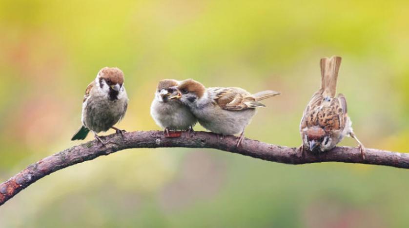 الضجيج يمنع صغار الطيور من تعلم الغناء و «بلوتونيوم» فضائي من عمر الأرض في أعماق المحيط