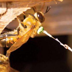 الرادار يكشف غموض تزاوج النحل