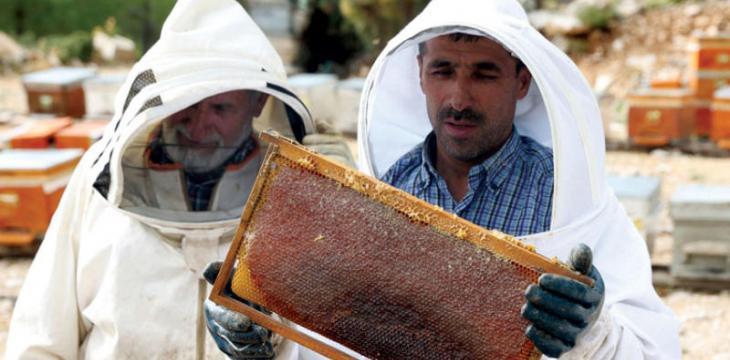 عسل الصنوبر التركي«مفقود» بتوقيع الحرائق